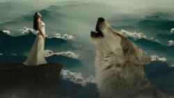 Kontakt-mit-der-Seele-Essenz-Obermaier-wolf