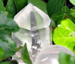 bergkristall-efeu