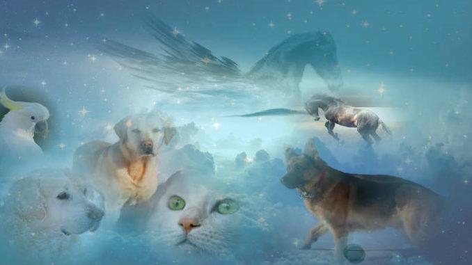 pferd-hund-katze-vogel-himmel-beyond