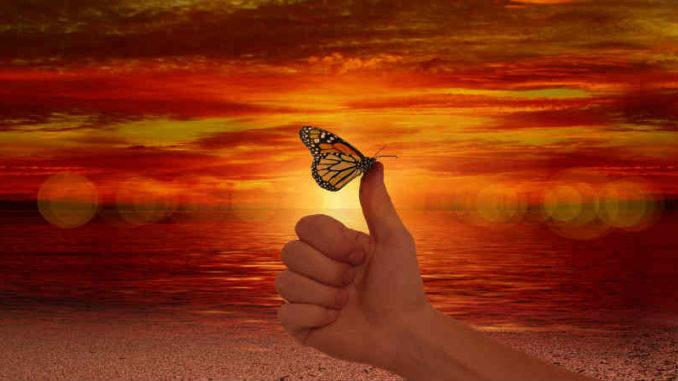 transformation-bewusstsein-like