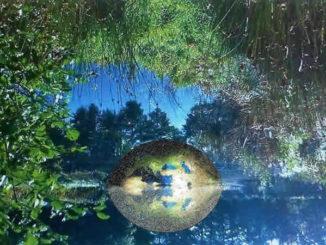 traum-blaetter-wasser-erde-nature