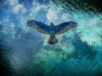 schamanisches-energiemedizin-sehen-tracken-bird