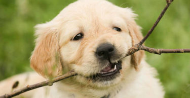 tierkommunikation-yvonne-sebestyen-puppy