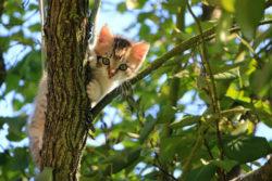 Tipps-fuer-Tierkommunikation-cat