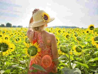 bestimmung-lebensaufgabe-fruehlingserwachen-sunflowers