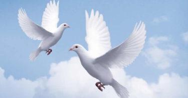 AMORC-Frieden-Bekenntnis