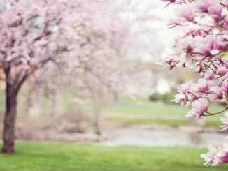 Astrologie-Mai2019-Kirsten Hansen-magnolia