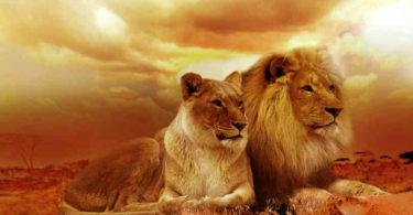 Hochsensibilitaeat-Empathie-Narzissmus-Macht-lion