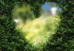 herzintelligenz-naturgesetze-heart