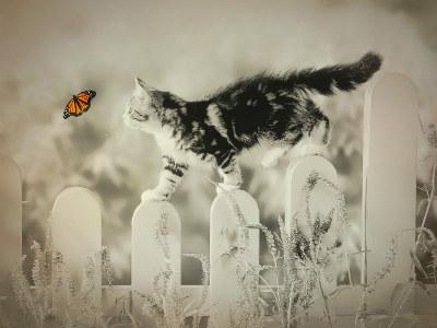 tierkommunikation-vermisstes-tier-cat