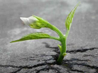 astrologische-Trends-Mai2019-neues erschaffen-sprout