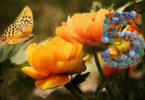 blume-schmetterling-fuenf-flowers