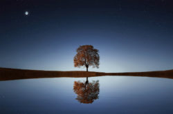 unsterblicher-geist-koerper-seele-geist-drei-einheit-tree