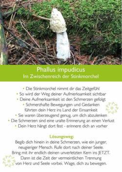 Karte-Stinkmorchel-Kim-Fohlenstein
