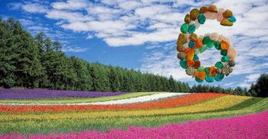 editha-wuest-juni-2019-blumenfeld-flower-field
