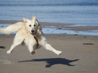 urlaub-mit-tier-tierkommunikation-dog