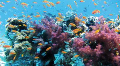 Artenvielfalt und das Verschwinden der Fülle