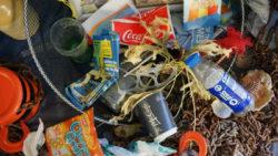 Wegwerfgesellschaft-Plastik-Plastikmuell-Umweltverschmutzung-Klimawandel-rubbish