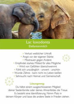 kim-fohlenstein-karte-Lac-Loxodonta