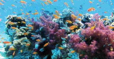 Artenvielfalt-Fuelle-Klimawandel-Korealle-underwater