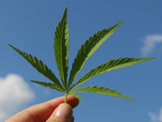 CBD-Oel-spirituelle-Gesundheit-canabis-hanf-hemp-leaf