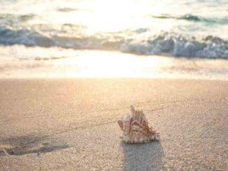 uelle-Geschenk-Leben-Kreativitaet-erschaffen-Meer-Muschel-beach