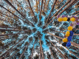 wald-wuest-juli-forest