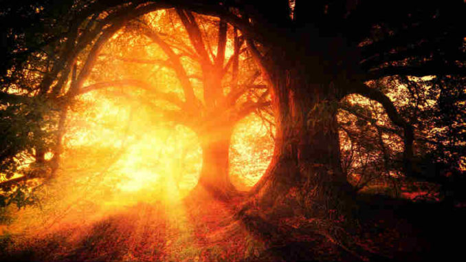 wohnen-in-mir-Mystik-sonnenstrahl-baeume-trees