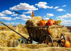Energien-der-Erde-Elemente-thanksgiving