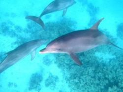 Aegypten2020-Delfinschwimmen-Tempel-Erholung-Kukulkan-Reisen-3