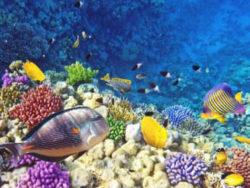 Aegypten2020-Delfinschwimmen-Tempel-Erholung-Kukulkan-Reisen-4