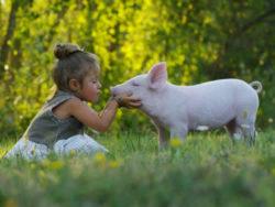 Gesunde und nachhaltige Ernährung-hageneder-girl-pig-schwein-kind-wiese-shutterstock