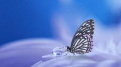Ego-und-das-wahre-ICH-in-Einklang-bringen-Barbara-Bessen-butterfly-e1574501992508