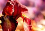 astrologische-monatstrends-september-anja-block-flower