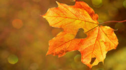 Astrologische-Monatstrends-Oktober-2019-Integration-Schattenanteile-heart