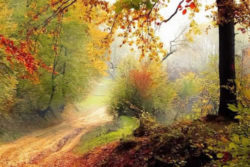 Herbst mit Ayurveda mit Leichtigkeit meistern