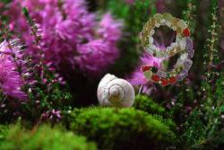 Schnecke-Spirale-Moos-neun-snail