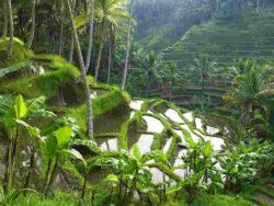 Bali-ethnoTOURS-Alexandra-Stenner-2