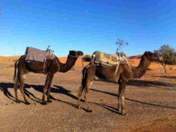 Marokko-ethnoTOURS-Alexandra-Stenner-9