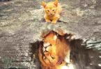 Tierkommunikation-Katze-Loewe-cat