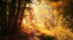 goldener-Oktober-sonnenstrahlen-wald-autumn