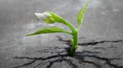 Liebe-durchdringt-alles-Pflanze-Asphalt-sprout