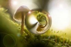 sechste-universelle-Gesetz-Prinzip-Rhythmus-Schwingung-nature