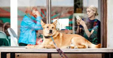 Online-Sucht-Verbundenheit-Handy-dog