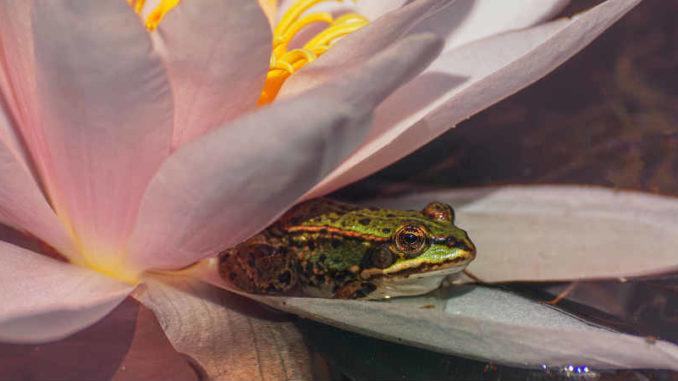 Seelenheil-Lebensthemen-Erloesung-water-lily