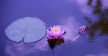 Spirituelle-philippinische-Heilkunst-Michelle-Orbito-lotus