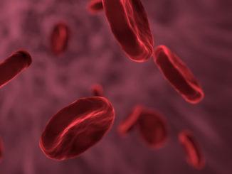 Ein gesunder Geist wohnt in einem gesunden Körper-rote-blutkoerper-red-blood-cells