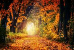 zyklen-herbst-wald-blaetter-autumn