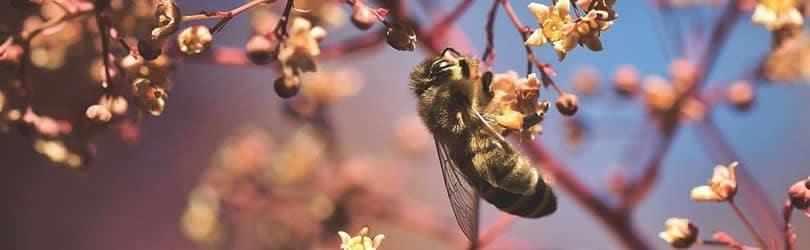 achtsamkeit-biene-bluete-bee