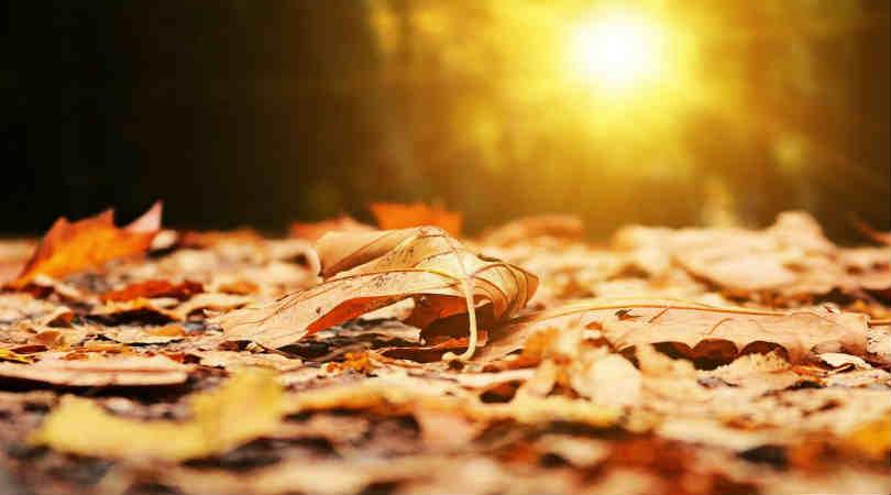 Erneuerung-Engel-Channeling-Blaetter-Herbst-autumn
